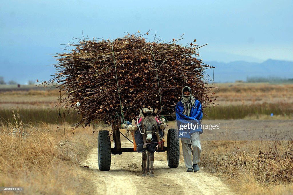 An Afghan farmer carries firewood on a donkey cart as winter begins in Mazar-i-sharif on December 5, 2013. Afghans are busy preparing for winter, as high unemployment and the high cost of living have increased the vulnerability to the weather for large sections of the population. AFP PHOTO/Farshad USYAN