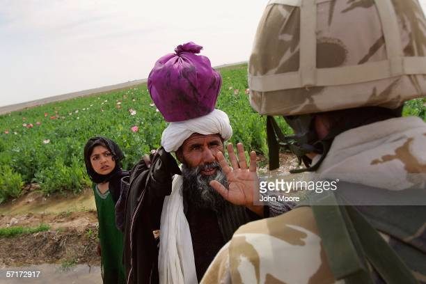 An Afghan farmer pleads with a British officer not to destroy his opium poppy field on March 24 2006 near Lashkar Gah in the Helmand province of...