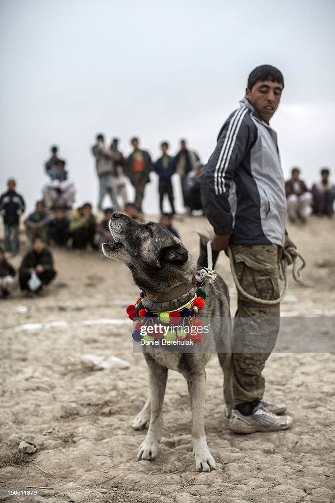 An Afghan man stands with his fighting mastiff dog during the weekly dog fights on November 16, 2012 in Kabul, Afghanistan. Dog fighting was banned under the Taliban for being un-Islamic but it is now common practice.