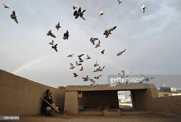 An Afghan man watches pigeons on the roof of his house as a rainbow forms in the background in Mazari Sharif on February 19 2012 Mazari Sharif is the...