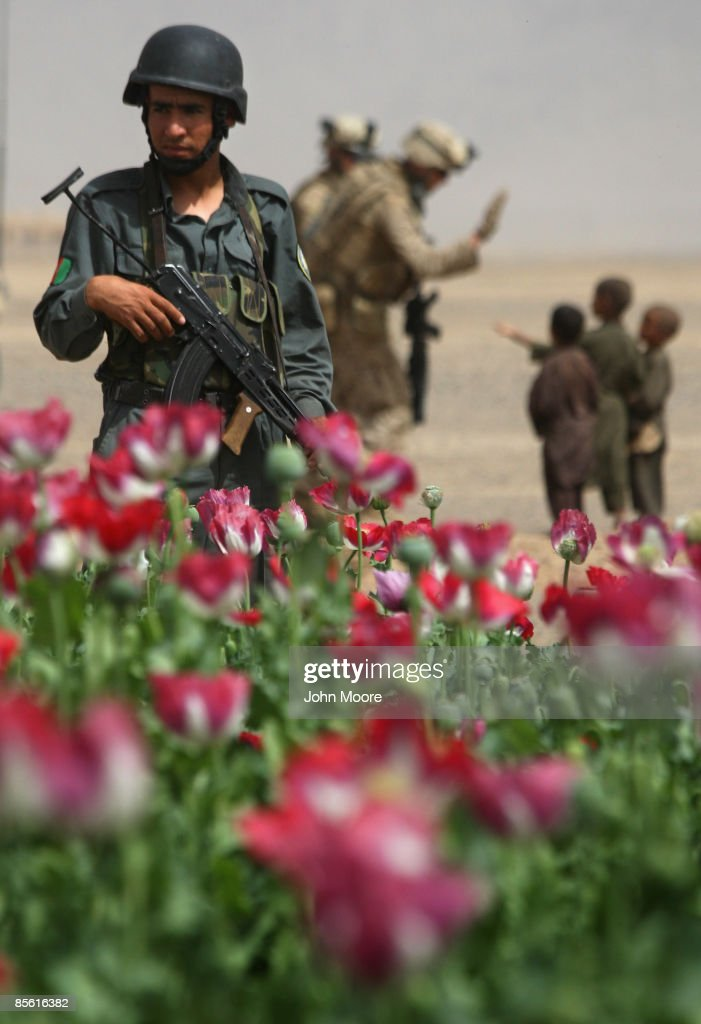 An Afghan policeman looks over an opium poppy field while on a joint patrol with U.S. Marines on March 26, 2009 near Bakwa in southwestern Afghanistan. Marines from the 3rd Battalion, 8th Marine Regiment patrol daily in the area, often with Afghan police. Local opium poppy and wheat farmers say the presence of the Marines has made the region, formerly controlled by the Taliban, much safer. Some 17,000 additional U.S. forces will arrive soon to Afghanistan, with the aim of yet further extending the area of U.S. and Afghan government control into more remote areas of the country.
