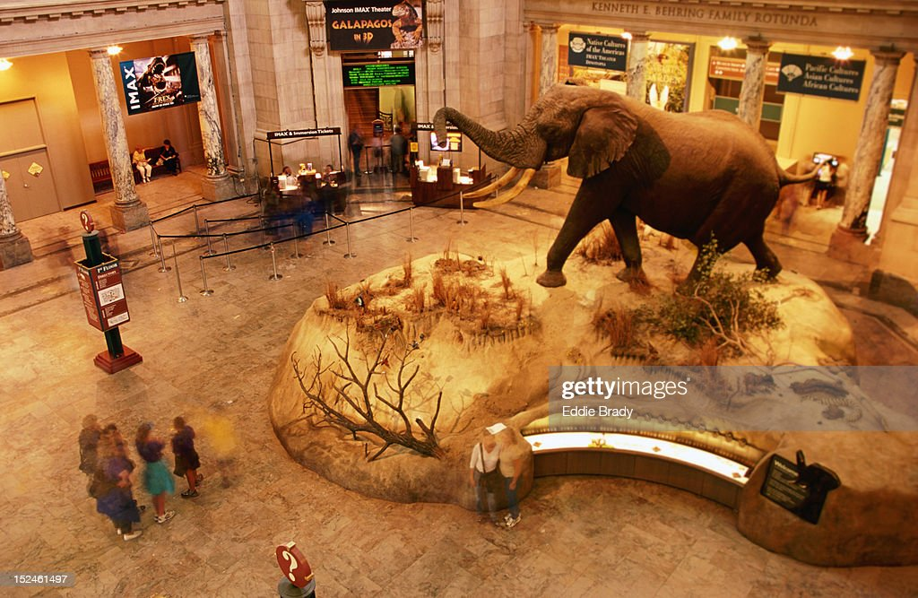 An African bull elephant greets visitors in the rotunda of the SmithsonianÆs National Museum of Natural History. : Stock Photo