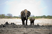 An African elephant and her baby are pictured on November 18 2012 in Hwange National Park in Zimbabwe AFP PHOTO MARTIN BUREAU