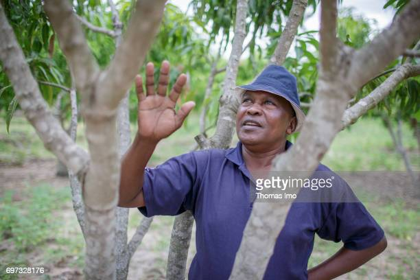 An African farmer stands under a tree on a mango farm on May 19 2017 in Ithanka Kenya