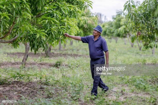 An African farmer walks across his mango farm on May 19 2017 in Ithanka Kenya