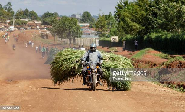 An African transports reed grass on his motorcycle on May 16 2017 in Kakamega County Kenya