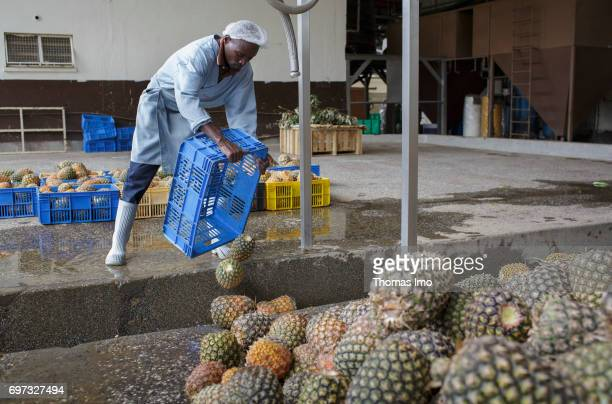 An African worker empties boxes full of pineapples Production of pineapple juice at beverages manufacturer Kevian Kenya Ltd on May 18 2017 in Thika...