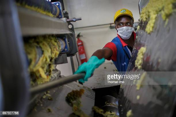 An African worker removes remains of pineapple fruits from a fruit press Production of pineapple juice at beverage manufacturer Kevian Kenya Ltd on...
