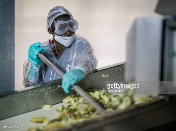An African worker while working on an assembly line conveying the remains of pineapple fruits Production of pineapple juice at beverages manufacturer...