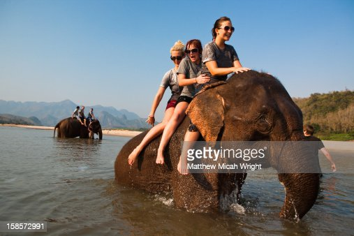 An afternoon spent playing with elephants : Stock Photo