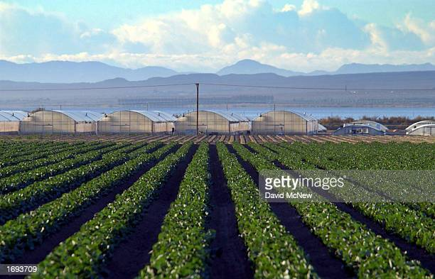 An agricultural field is shown near the Salton Sea seen in the distance in the Coachella Valley December 18 2002 near Mecca California Earlier this...