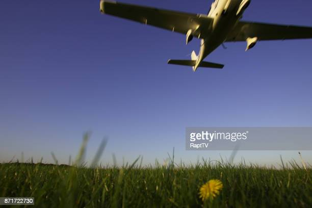 An airplane in landing/take off manoeuvre over lush grass a a flowering dandelion.