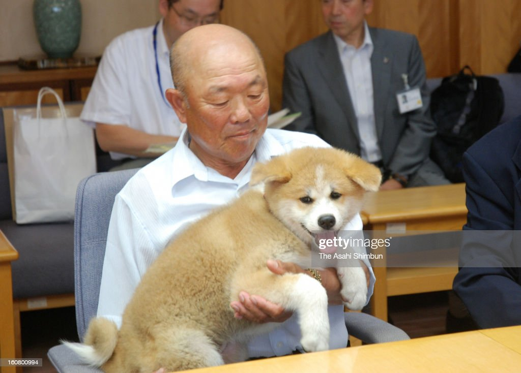 An Akita dog 'Yume' is seen at Akita Prefecture headquarters on July 23, 2013 in Akita, Japan. Akita prefecture governor Norihisa Satake sends the dog as appreciation of Russia's support in the Great East Japan Earthquake.