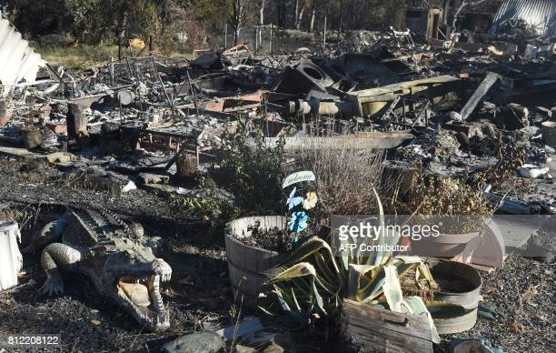 An alligator statue is seen amidst the burned out remains of a residence after the Wall fire tore through the area in Oroville California on July 10...