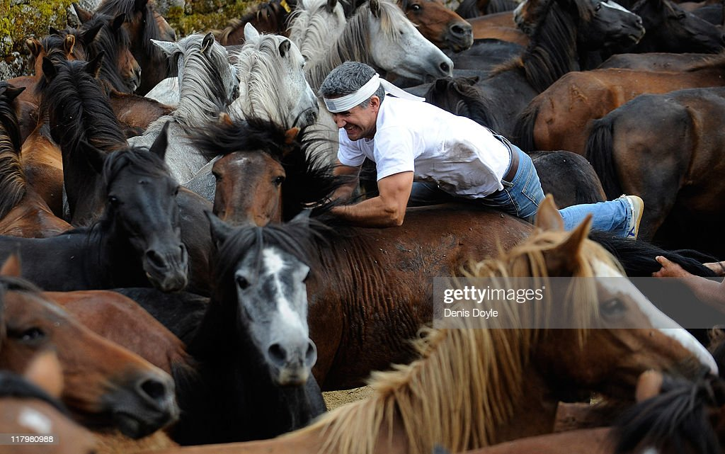 An Aloitador (fighter) holds on to a wild horse during the Rapa das Bestas (shearing of the beasts) festival on July 2, 2011 in Sabucedo, Spain. Hundreds of wild horses are rounded up from the mountains and trimmed and marked in the corral.