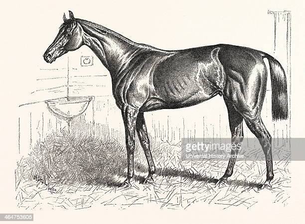 An American Racer In England Mr Keene's 'foxhall' Winner Of The Bretby Nursery Plate Drawn H Stull US USA America United States American Engraving...