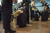 An Amtrak police officer with a K9 patrol in Union Station March 22 2016 in Washington DC New York and Washington DC stepped up security in the wake...