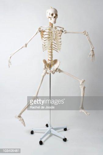 An anatomical skeleton model running and jumping