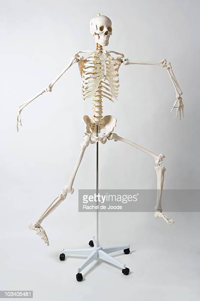 An anatomical skeleton model running and jumping