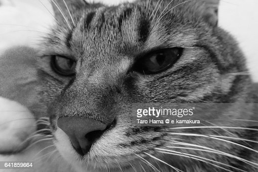 An angry look cat