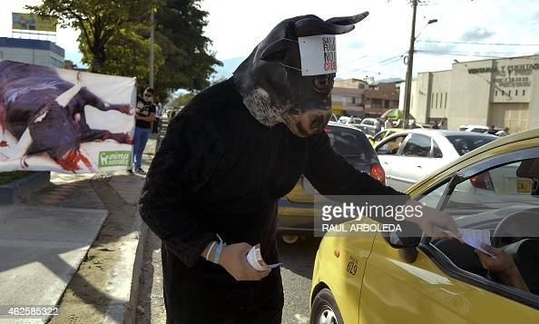 An animal rights activist fancy dressed as a bull hands out fliers against bullfighting in the surroundings of La Macarena bullring on January 31...