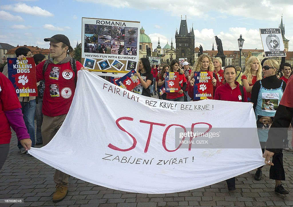 An animal rights activist hold a protest banner against the new law on stray dogs culling, on September 27, 2013 in Prague. Romania's stray dog problem was discussed again after a four-year-old boy was mauled to death by a pack of strays at the beginning of September 2013. Between 40,000 and 60,000 stray dogs live on the streets of Bucharest, most of them fed and looked after by animal lovers. AFP PHOTO/MICHAL CIZEK