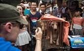 An animal rights activist takes a picture of vendors waiting for customers to buy dogs in cages at a market in Yulin in southern China's Guangin...