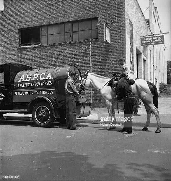 An animal welfare officer checks the tack of a horse as it fills up on free water from a truck supplied by the American Society for the Prevention of...