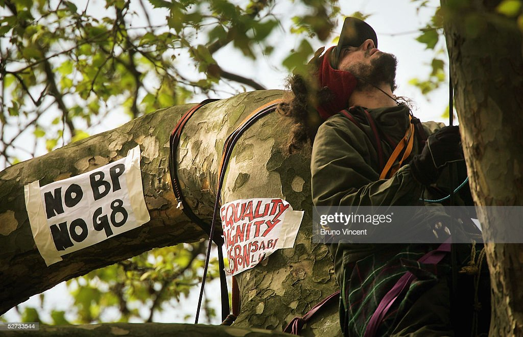 An anti-British Petroleum protestor is seen in the branches of a tree in St. James' Square, April 29, 2005 in London.