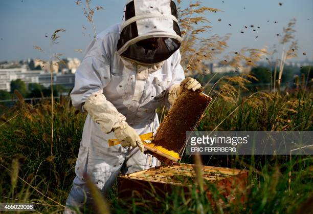 An apiculturist collects honey in a beehive on the roof of the Beaugrenelle shopping centre in Paris on September 9 2014 AFP PHOTO / ERIC FEFERBERG