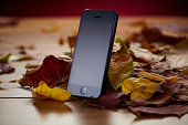 An Apple iPhone 5 photographed on a bed of autumn leaves taken on October 8 2013