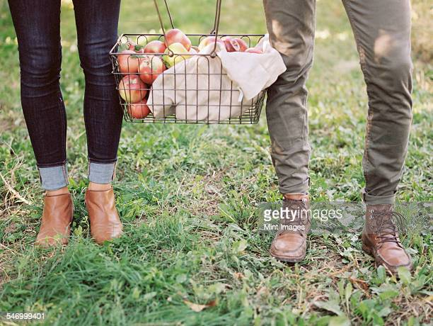 An apple orchard in Utah. A couple carrying a basket of apples.