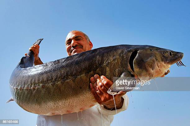 An Arab worker carries a live female sturgeon which could hold as much as two kilograms of roe inside of her into a caviar processing plant on April...