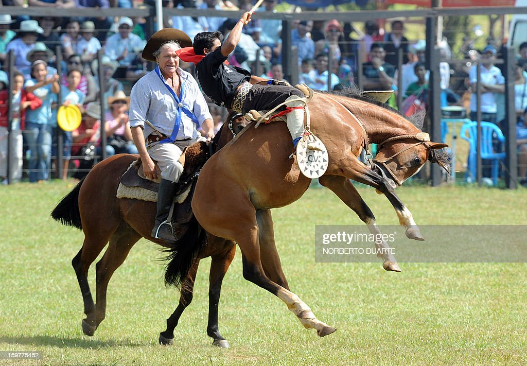 An Argentine gaucho rides a colt during a rodeo on January 20 2013 within the Misiones Traditional Festival held yearly in Santiago Misiones some 270...