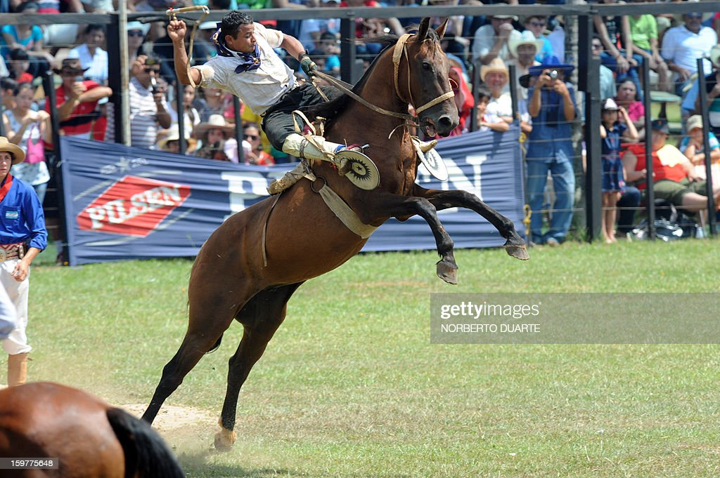 An Argentinian gaucho rides a colt during a rodeo on January 20 2013 within the Misiones Traditional Festival held yearly in Santiago Misiones some...