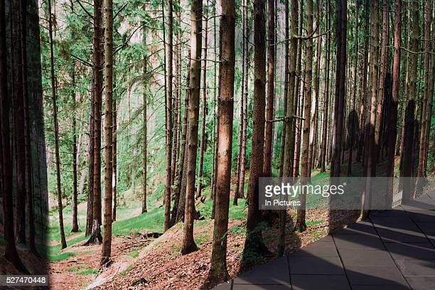 An artwork showing a background of forest is seen in a London urban street Tall straight pine trees in rural woodland the epitome of freshly scent...