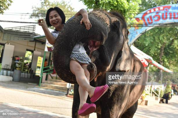 CHONBURI MARCH 2 2017 An Asian elephant holds up a tourist with its trunk at a zoo in central Thailand's Chonburi Province March 1 2017 In Thailand...