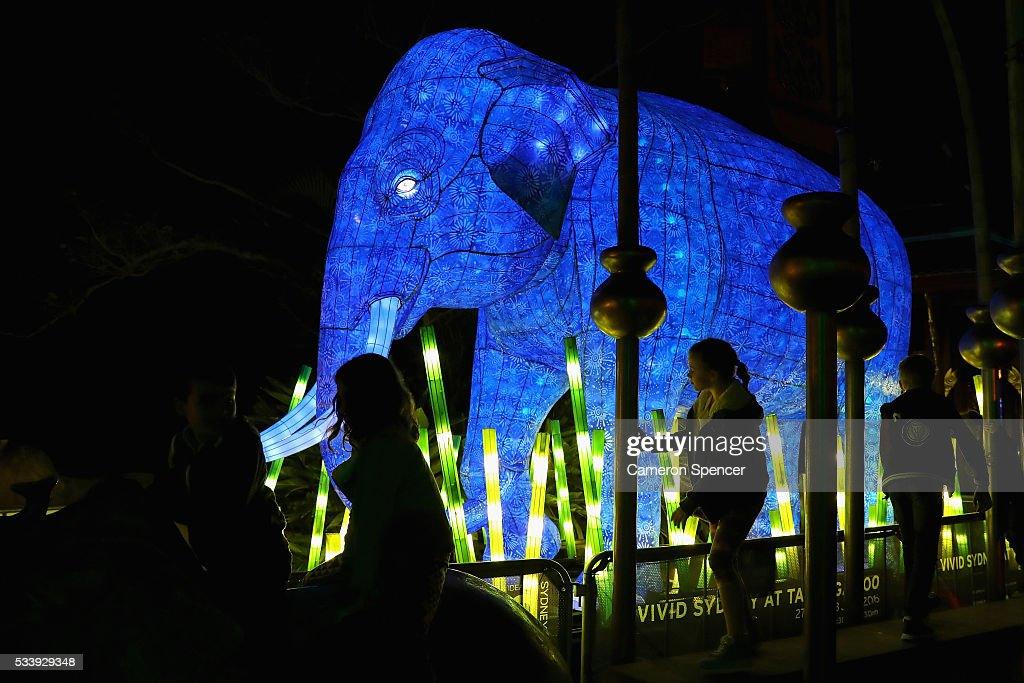 An Asian elephant light sculpture is displayed during a media preview of Vivid Sydney illuminated displays at Taronga Zoo on May 24, 2016 in Sydney, Australia. Vivid is lighting up at Taronga Zoo for the first time with ten giant animal sculptures representing critical species the zoo is committed to protecting. Held annually, Vivid Sydney is the world's largest festival of light, music and ideas running for 23 days.