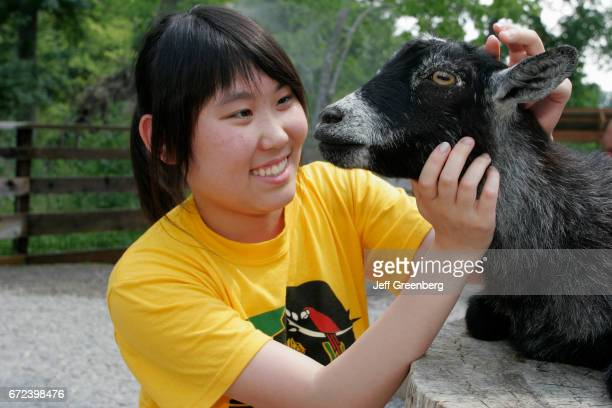 An Asian girl stroking a pygmy goat in the petting area at Birmingham zoo
