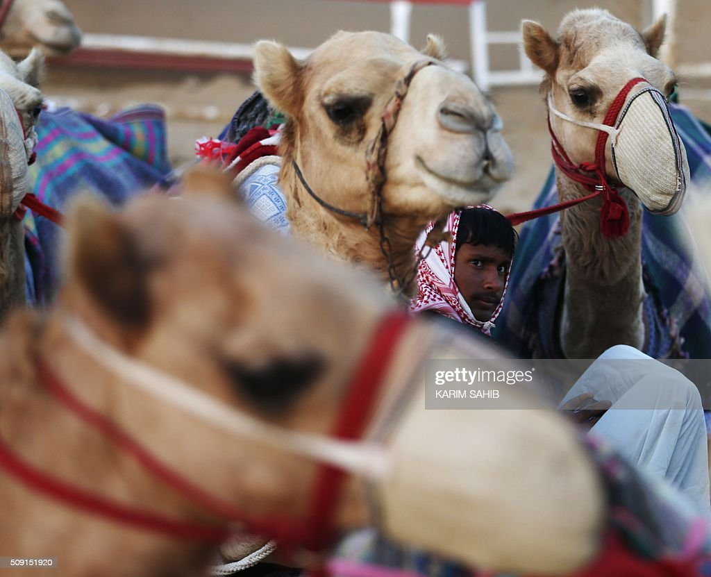 An Asian worker sits amid camels at the Sweihan racecourse before a training race on February 9, 2016, during the Sheikh Sultan Bin Zayed al-Nahyan heritage festival in Al-Ain. / AFP / KARIM SAHIB
