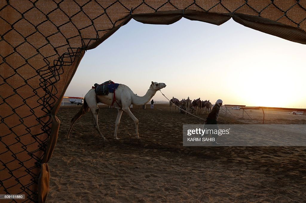 An Asian worker walks a camel at the Sweihan racecourse before a training race on February 9, 2016, during the Sheikh Sultan Bin Zayed al-Nahyan heritage festival in Al-Ain. / AFP / KARIM SAHIB