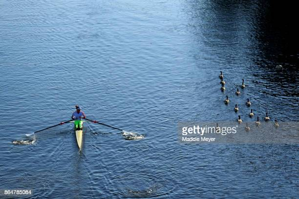 An athlete rows past geese in the Charles River during the Head of the Charles Regatta on October 21 2017 in Boston Massachusetts
