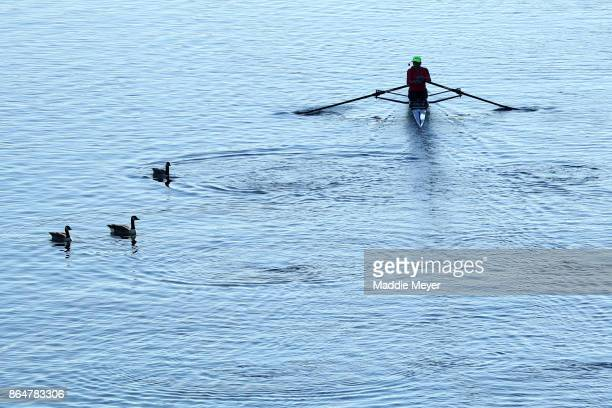 An athlete rows past geese on the Charles River during the Head of the Charles Regatta on October 21 2017 in Boston Massachusetts