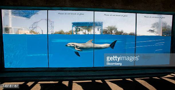 An Atlantic bottlenose dolphin swims past a glass view area at the Six Flags Discovery Kingdom amusement park in Vallejo California US on Monday July...