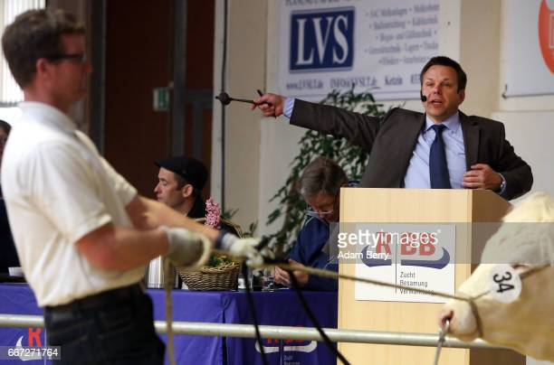 An auctioneer announces winning bids during an annual heifer auction on April 11 2017 in Gross Kreutz Germany Around 80 Angus Charolais Hereford...