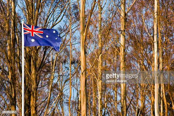 An Australian flag flaps in the wind beside a eucalyptus forest.