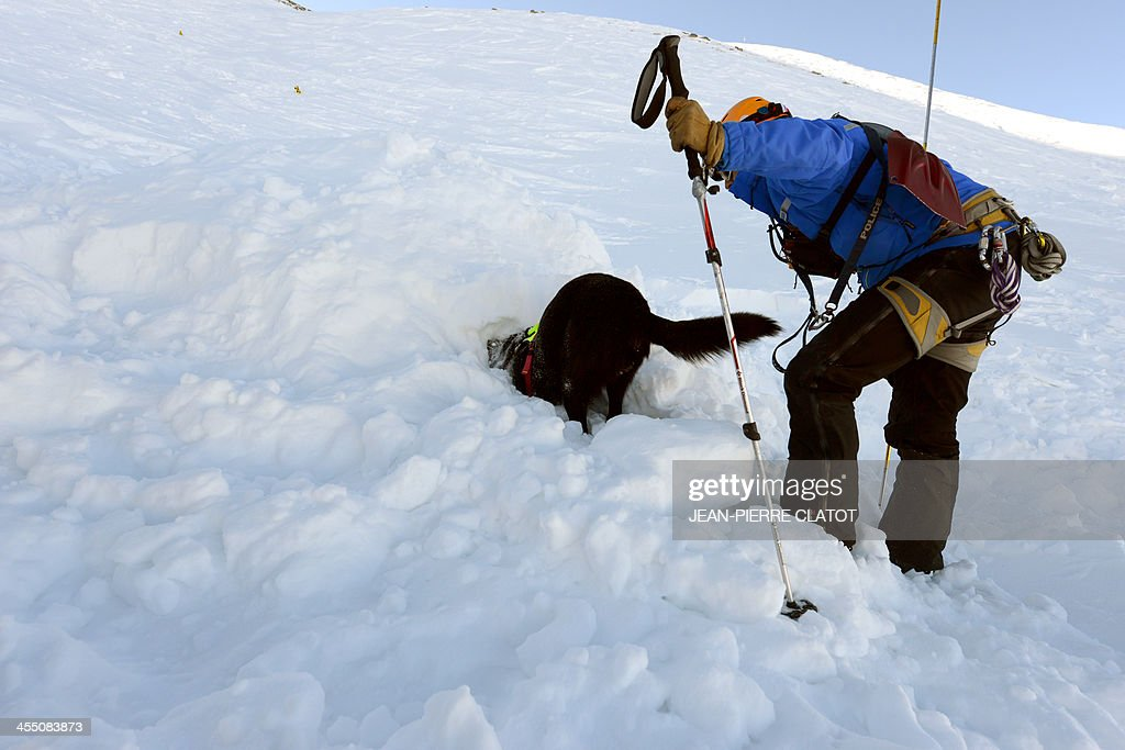 An avalanche dog and A trainee take part in a mock avalanche drill, on December 11, 2013 near Les Deux Alpes ski resort, French Alps.