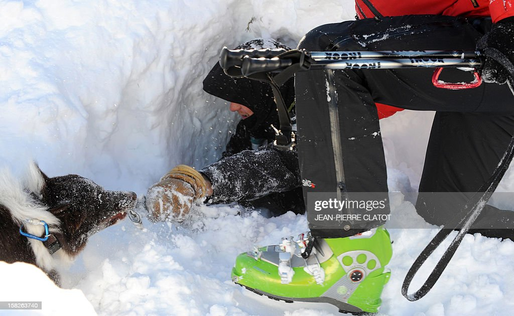 An avalanche dog and his master free a person buried in the snow, on December 11, 2012, during an avalanche dogs training session near Les Deux Alpes ski resort in the French Alps. France, with 140 avalanche rescue teams with dogs, is a reference in this activity sector which trains foreigners from Europe and other continents.