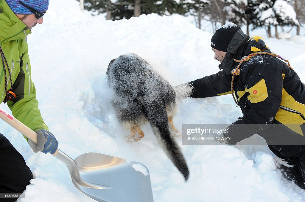 An avalanche dog and rescuers dig to free a person buried in the snow, on December 11, 2012, during an avalanche dogs training session near Les Deux Alpes ski resort in the French Alps. France, with 140 avalanche rescue teams with dogs, is a reference in this activity sector which trains foreigners from Europe and other continents. AFP PHOTO JEAN-PIERRE CLATOT