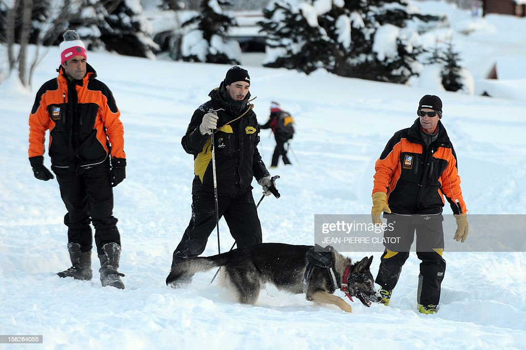 An avalanche dog and trainees search for people buried in the snow, on December 11, 2012, during an avalanche dogs training session near Les Deux Alpes ski resort in the French Alps. France, with 140 avalanche rescue teams with dogs, is a reference in this activity sector which trains foreigners from Europe and other continents.
